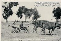 عکس از قبرس قدیم (1)