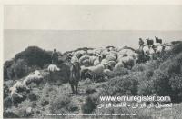 عکس از قبرس قدیم (23)